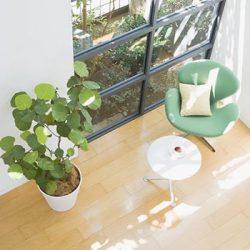 HDC神戸「今から始めよう!インテリアグリーンの選び方」
